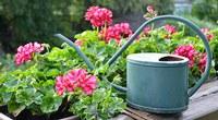 Balkonpflanzen von Pötschke